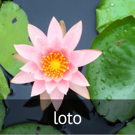 Esencia de loto en Diverco