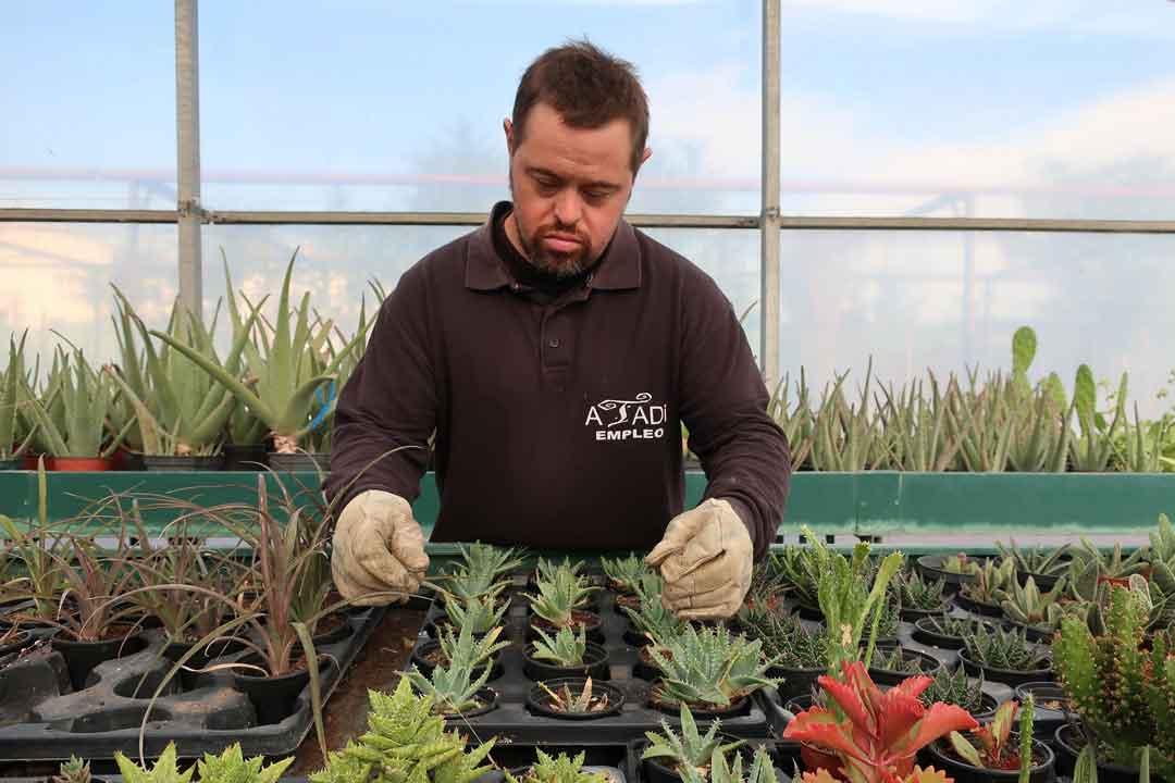 Relación de candidatos admitidos al Taller de Empleo 'Cultivando primaveras de inserción'